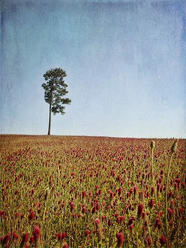 trees texture field pinetree tx d200 clover stomp easttexas enochs harleton skeletalmess nancypasel texturedtexas