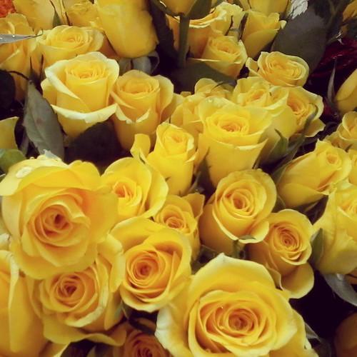 Good Morning Flowers Rose Colors Nature Lovely Love Flickr