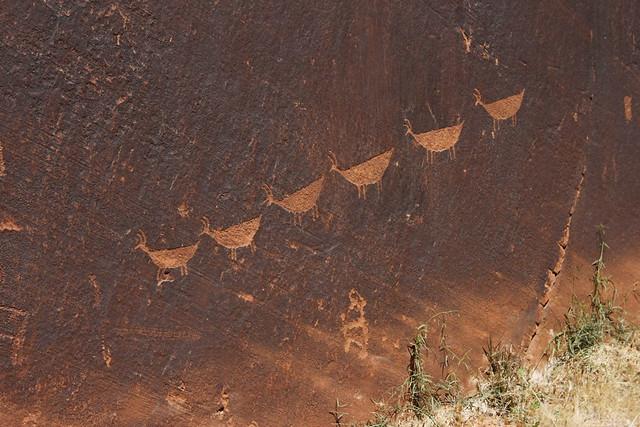 arizona 103