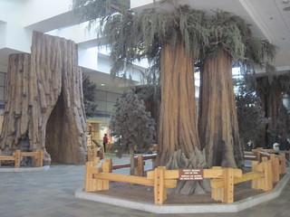 sequoia trees at Fresno Yosemite International Airport