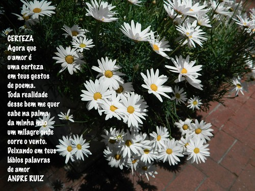 CERTEZA by amigos do poeta