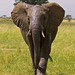 8748603752 3d001bafb9 s Thomson Safaris Review: We will treasure this trip for a lifetime