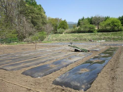 畑と新緑 2013年5月18日11:29 by Poran111