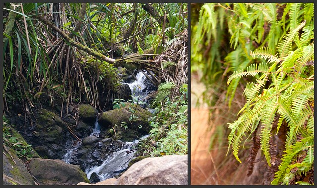kauai trail 11