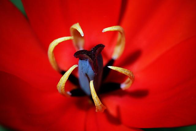 Tulip centre