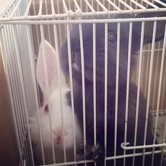animal, cage, pet, mammal, animal shelter,