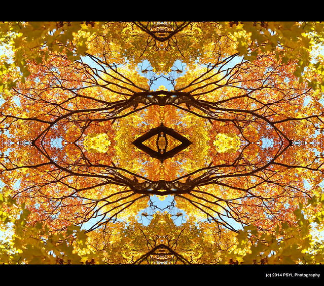 Nature Kaleidoscope