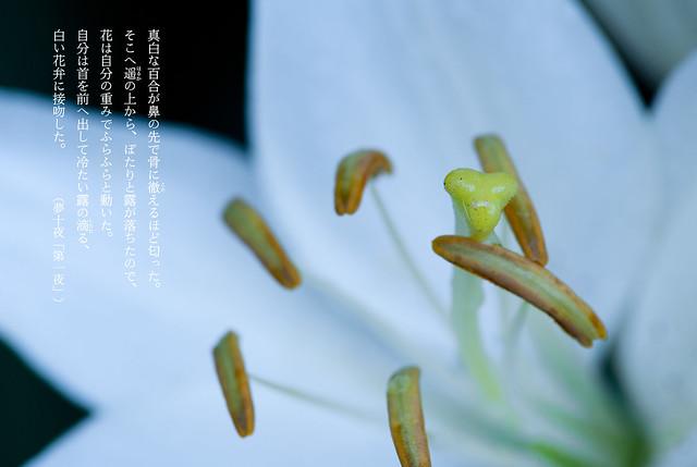 夏目漱石の世界 Soseki's World