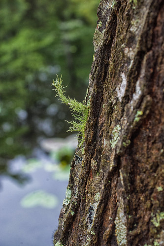 2015 virginia nature outdoor outdoors easternshore delmarva nosduhmj day travel maryland
