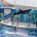 150216 Enoshima Aquarium-22.jpg