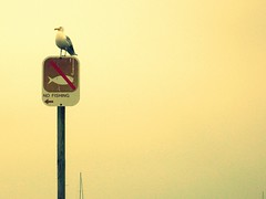 Tell that to the gull.