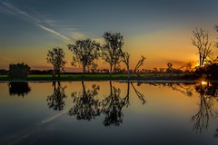Reflections of Kakadu