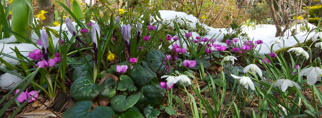 Flowers Of Early Spring March 31 Severe Winter Weather R Flickr