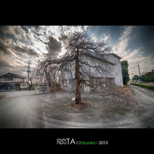 tree japan landscape sakura shizuoka hdr nig