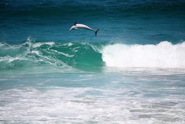 See that dolphin jump