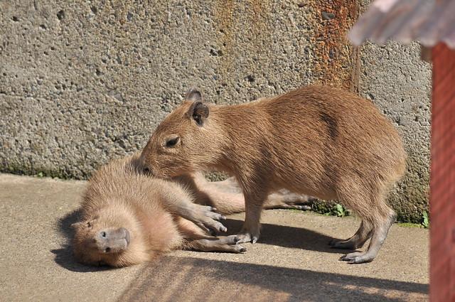 春の青春18きっぷの旅 茨城県日立かみね動物園