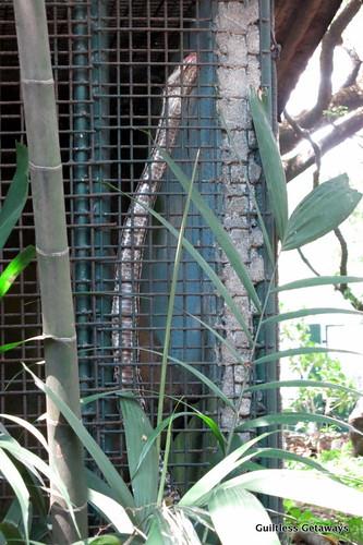 snake-in-cage.jpg