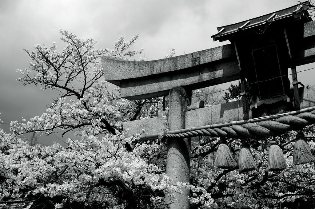 Symbol of JAPAN