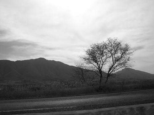 Trees, Mexico