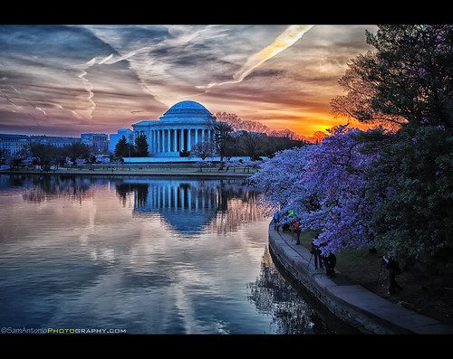 Cherry Blossom Sunrise at the Jefferson Memorial by Sam Antonio Photography