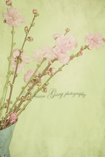 Vintage Spring Blossoms by *GloriousNature*bySusanGaryPhotography
