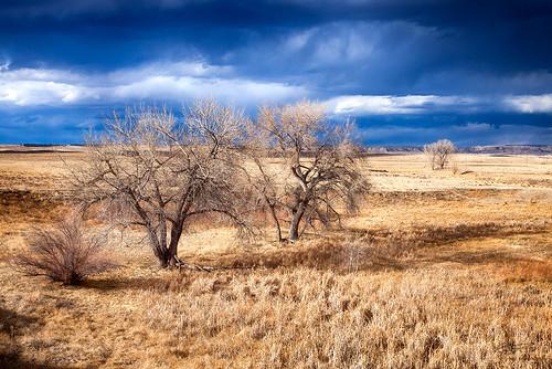 sky tree canon landscape colorado coloradosprings canonef24105mmf4lisusm canoneos5dmarkii