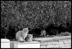 Chiens, chats et autres animaux