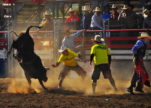 california bull lakeside rodeo americana southerncalifornia athlete drama rider sportsaction bullriding warmlight lifesavers bullrider dramaticlight directionallight lakesiderodeo
