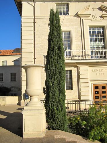 trees austin campus ut university texas tour botany