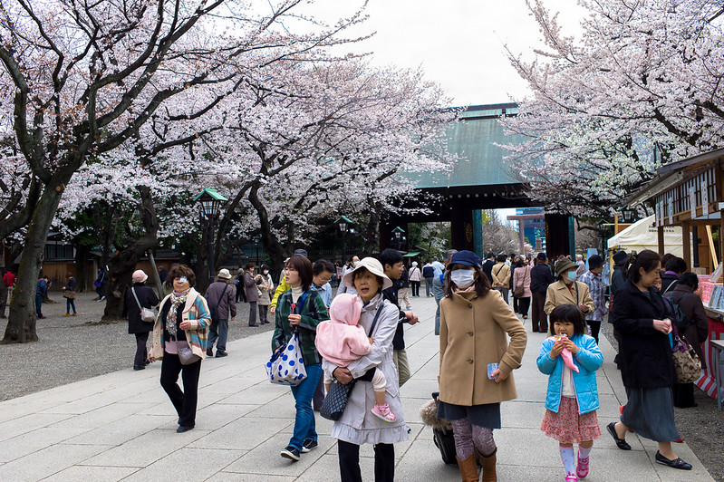 Visitors walking down a sakura tree-lined avenue in Yasukuni Shrine