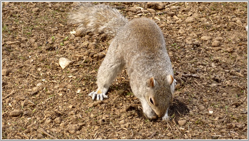 Ok.. you've caught me hiding my nuts...