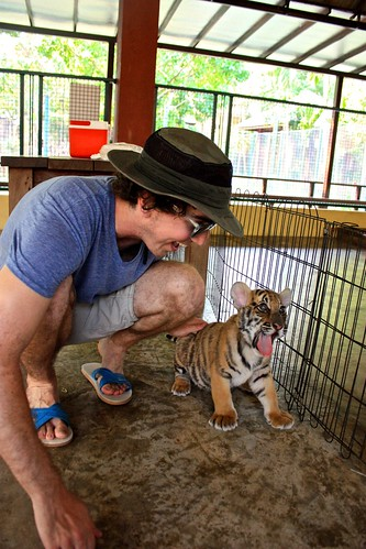 """the tiger says """"hey!"""""""