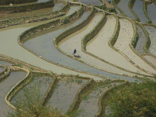 Yunnan13-Yuanyang 12-Malizhai (4)