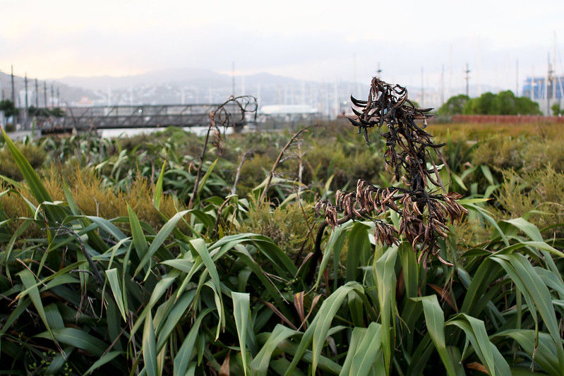 Monday, April 29: Waitangi Park Wetlands. It is so much darker in the evenings already. The sun was setting as I walked home, not long now till I'll be walking home in the dark.
