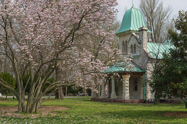 Tower Grove Park, in Saint Louis, Missouri, USA - trees in bloom