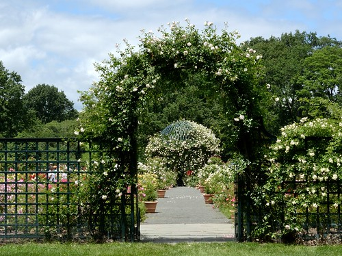 The Peggy Rockefeller Rose Garden