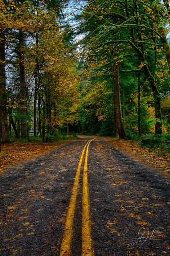 autumn forest green landscape road travel washington woodland unitedstates northamerica