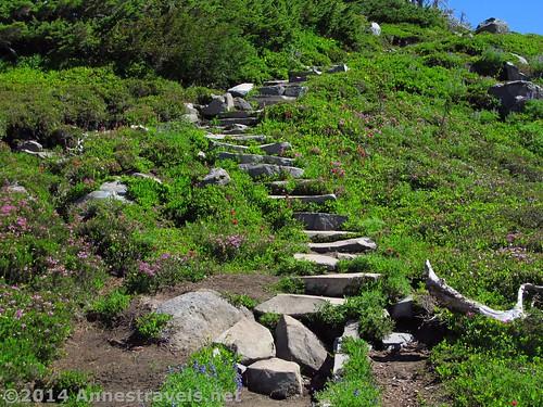 A set of stairs in Spray Park, Mt. Rainier National Park, Washington