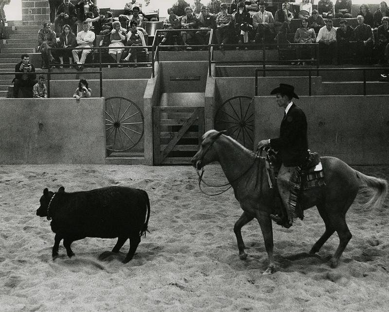 Horse Clinic