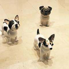 dog breed(1.0), animal(1.0), dog(1.0), pet(1.0), mammal(1.0), french bulldog(1.0), illustration(1.0), pug(1.0),