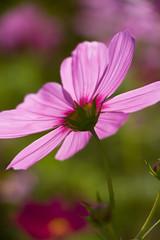 NOLA City Park Flowers-16