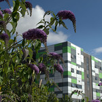 UCLan Media Building and Summer Colour - 2