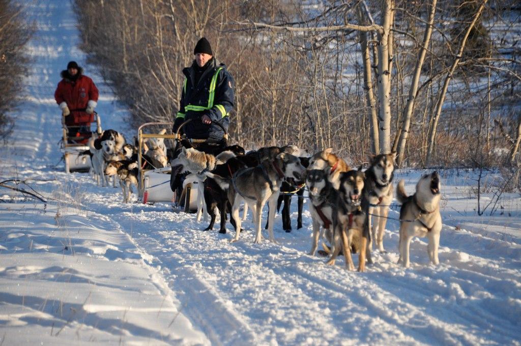 Blue Kennels Dog Sled Trips