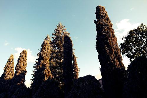sunset pinos