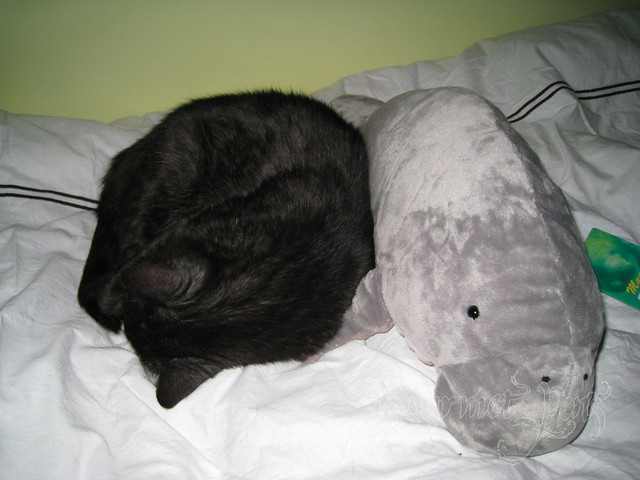 Angel Cuddles Stuffed Manatee