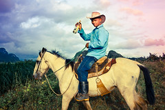 animal sports, equestrianism, trail riding, horse, mustang horse, person, cowboy,