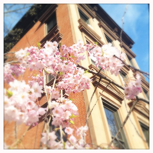IMG_6Spring in Fort Greene442