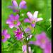 Beautiful Flower by d-k-t