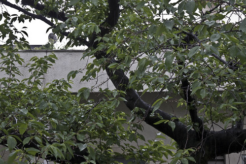 雨_2013-04-21