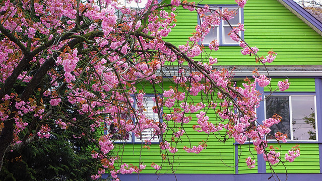 Bright Green House Bright Green House And Sakura Flickr Photo Sharing